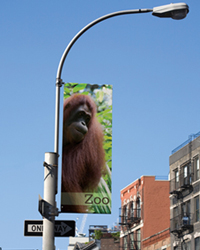 Street Banner Ape Lightpole